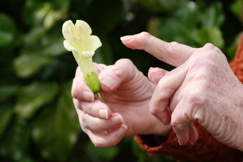 Tratament pentru artroza soldului